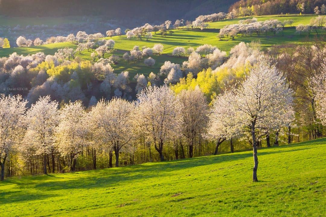 Čerešňový sen na konci sveta je neďaleko. Čo nájdete v Brdárke?